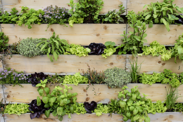 Living Walls For Home