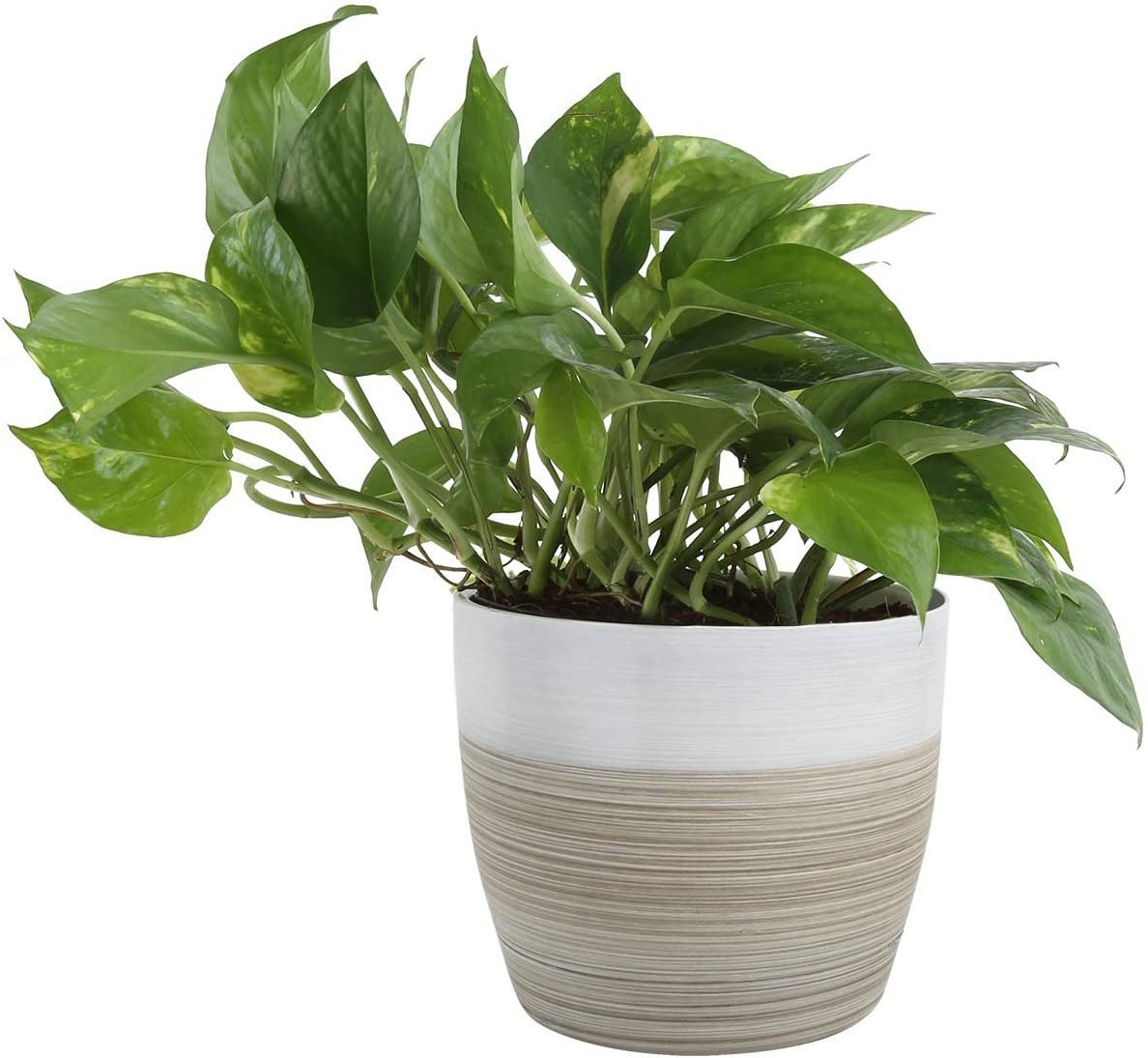 Natural Decor Planter Live Indoor Plant