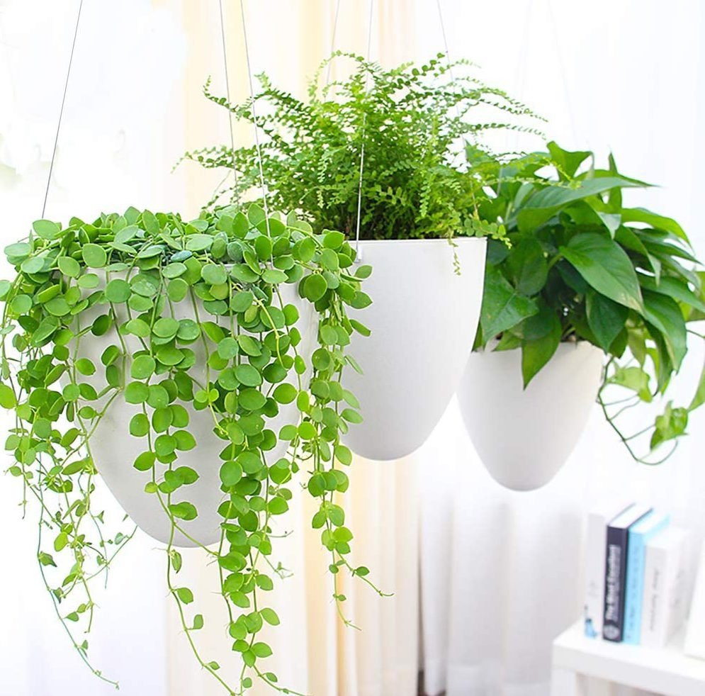 Sungmor Garden Self Watering Hanging Planter